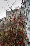与城堡的秋天风景 免版税图库摄影