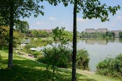 与城市大厦的嫩绿的湖边在晴朗的summ的背景中 图库摄影