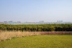 与城市的象草的湖边距离的在晴朗的冬日 库存图片