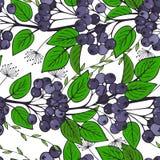 与堂梨属灌木分支的无缝的样式  束的装饰品aronia 免版税库存图片