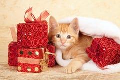与堆的小猫存在 免版税库存图片