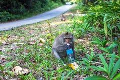 与塑料瓶的一只猴子坐在路一边 自然 免版税库存照片