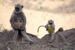 与塑料的猴子 库存图片