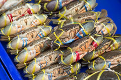 与塑料绳索的活螃蟹领带在篮子 库存图片