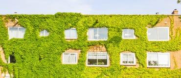 与墙壁的生态大厦有很多植物 免版税图库摄影