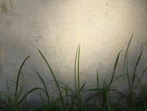 与墙壁的草 库存照片