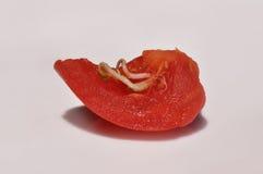 与增长的种子的蕃茄切片 免版税库存图片