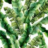 与壮观的香蕉棕榈叶的水彩样式 手画异乎寻常的绿叶分支 被隔绝的热带植物  免版税库存图片