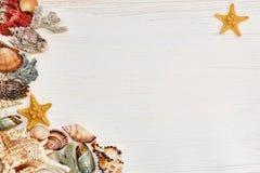 与壳和海星的木背景 免版税库存图片