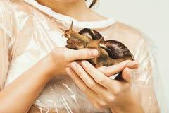 与壳的两只巨型蜗牛在妇女手上 免版税图库摄影