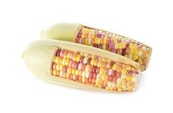 与壳的未煮过的彩虹玉米在白色背景 免版税图库摄影