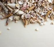 与壳的海构成 库存照片