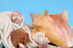 与壳的海蓝色背景 免版税图库摄影
