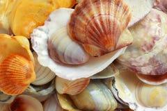与壳的照片背景 免版税库存照片