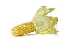 与壳的白色和黄色玉米在白色 库存图片