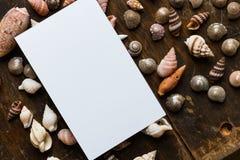 与壳的白色空插件 免版税图库摄影