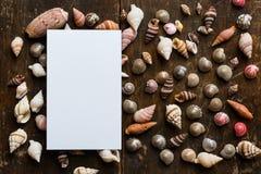 与壳的白色空插件 图库摄影