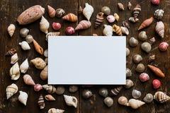 与壳的白色空插件 免版税库存图片