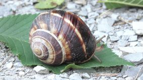 与壳的葡萄蜗牛 股票视频