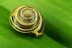 与壳的蜗牛与颜色和圈子 库存图片