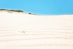 与壳的起波纹的空白沙子,水平 库存照片