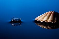 与壳的飞溅 库存照片