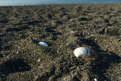 与壳的黑沙子海滩 库存照片