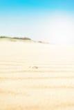 与壳,垂直,火光的起波纹的金黄沙子 免版税库存图片