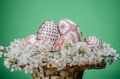 与复活节的篮子绘了鸡蛋和李子樱桃花 免版税图库摄影