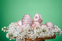 与复活节的篮子绘了鸡蛋和李子樱桃花 免版税库存图片