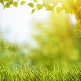 与夏天叶子的抽象自然本底 免版税库存照片