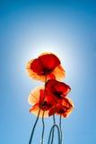 与夏天太阳的四鸦片 库存照片