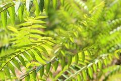 与夏威夷植物的异乎寻常的热带背景 库存图片