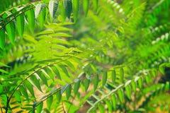 与夏威夷植物的异乎寻常的热带背景 库存照片