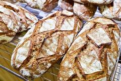 与外壳的新鲜面包 免版税库存照片
