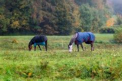 与外套的家谱马吃草的围拢在秋天tre之前 图库摄影