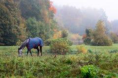 与外套的家谱马吃草的,围拢由有雾的autum 库存图片