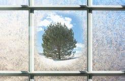 与外面杉树的结霜的冬天玻璃窗 免版税库存照片
