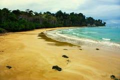 与多云天空和豪华的森林的海滩 免版税库存图片