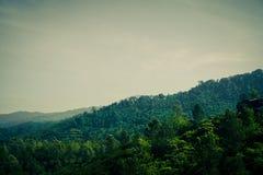 与多云天空和雾的绿色森林山在热带区域 免版税库存图片