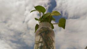 与多云天空的一leafpot 库存照片