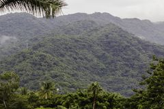 与多云天空的密林山 库存图片