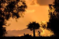 与多云橙色日落的自行车和树剪影 图库摄影