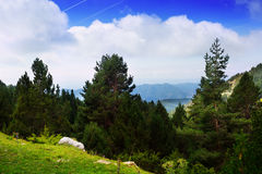 与多山森林的夏天风景 免版税图库摄影