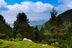 与多山森林的夏天风景 库存照片