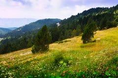 与多山草甸的夏天风景 比利牛斯 免版税图库摄影