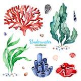 与多彩多姿的珊瑚礁、贝壳和海草的水彩汇集 向量例证