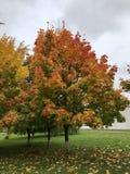 与多彩多姿的秋叶的一棵树 秋天秀丽  免版税库存照片