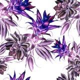 与多汁植物和叶子的明亮的无缝的样式 额嘴装饰飞行例证图象其纸部分燕子水彩 免版税库存图片