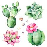 与多汁植物植物,小卵石石头,仙人掌的水彩汇集 库存例证